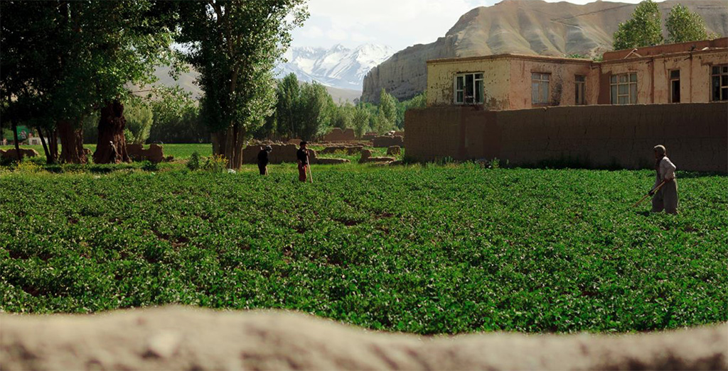 Frodig mark på landsbygda i Afghanistan
