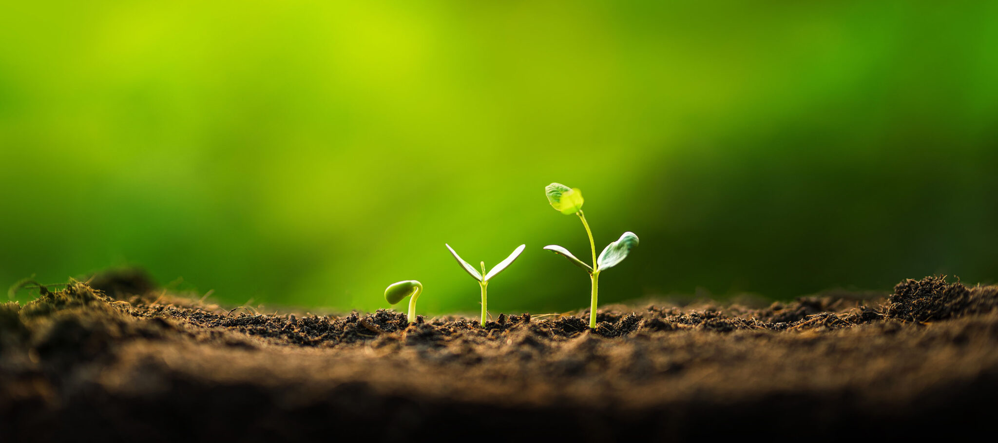 Grønne planter som spirer i jord