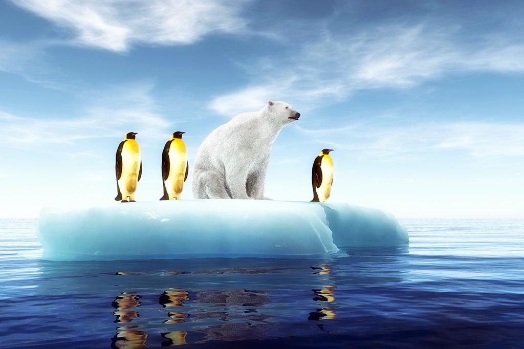 Isbjørn og pingviner på et isflak i havet.